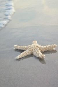 starfishtwo