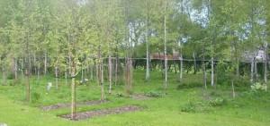burialwoods