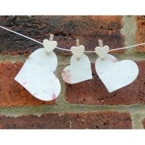 seedhearts