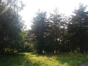 woodlandburial3