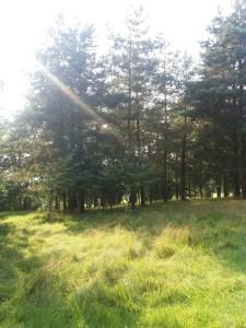 woodlandburial4
